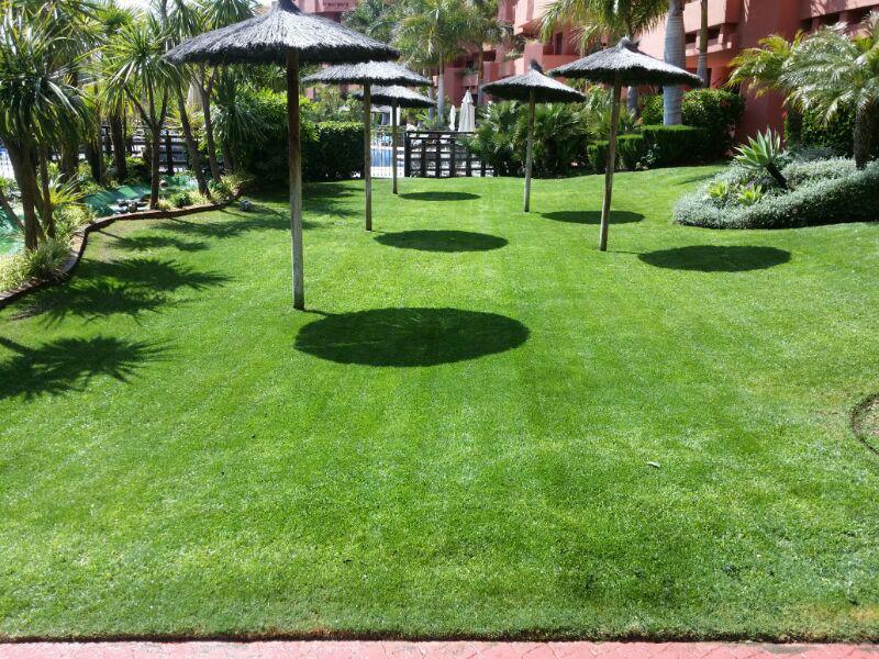 Empresa de jardineria en malaga greenthia for Empresas de jardineria
