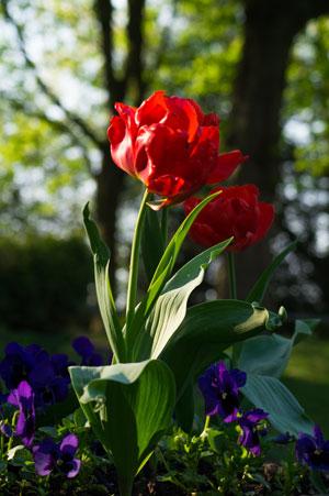 El dise ador de jardines el compositor de nuestra sinfon a verde - Disenador de jardines ...